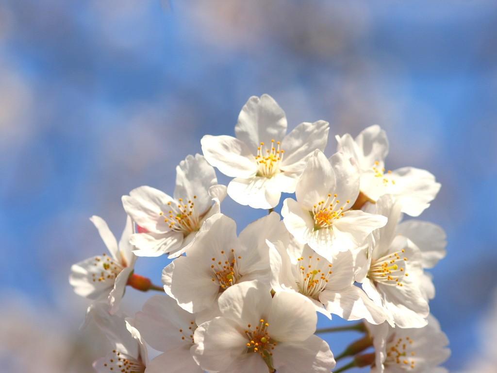 03月25日(日) Takaさん主催のお花見オフ